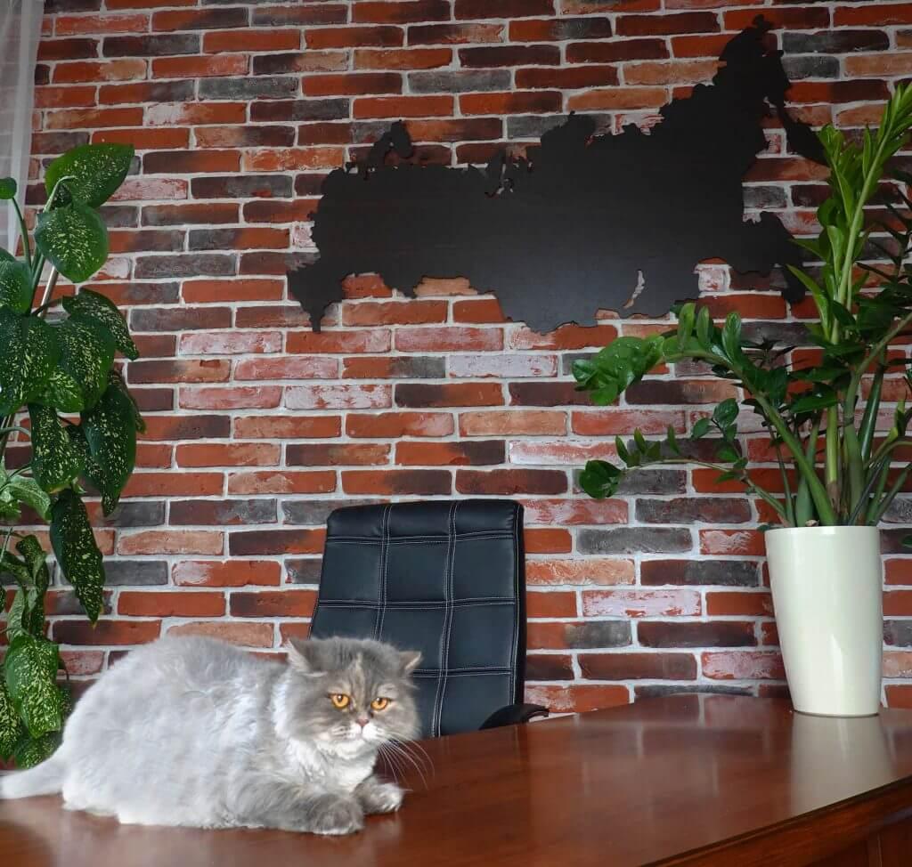 Карта с котиком